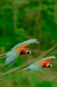 colorful birds flying